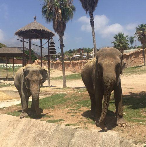 Benza colabora con Terra Natura para ayudar a la elefanta Kaiso