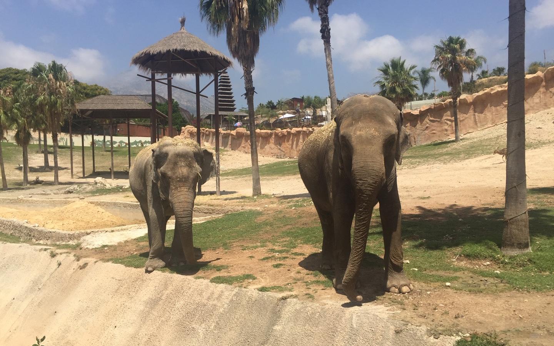 Benza collabore avec Terra Natura Benidorm pour aider Kaiso, une éléphante d'Asie de 35 ans